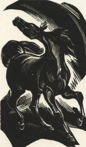 kotrba, horse