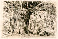 hamerton-great-oak-of-st-nisier_-2