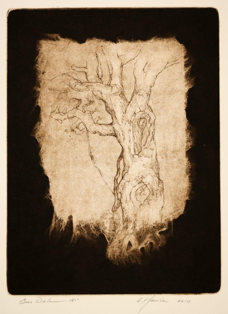 Hanka, Ladislav - Bur Oak - -4