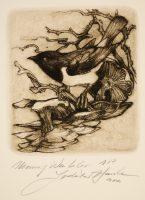 Hanka, Ladislav - Mourning Warbler - -17