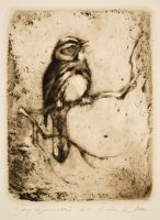 Hanka, Ladislav - Song Sparrow - -21