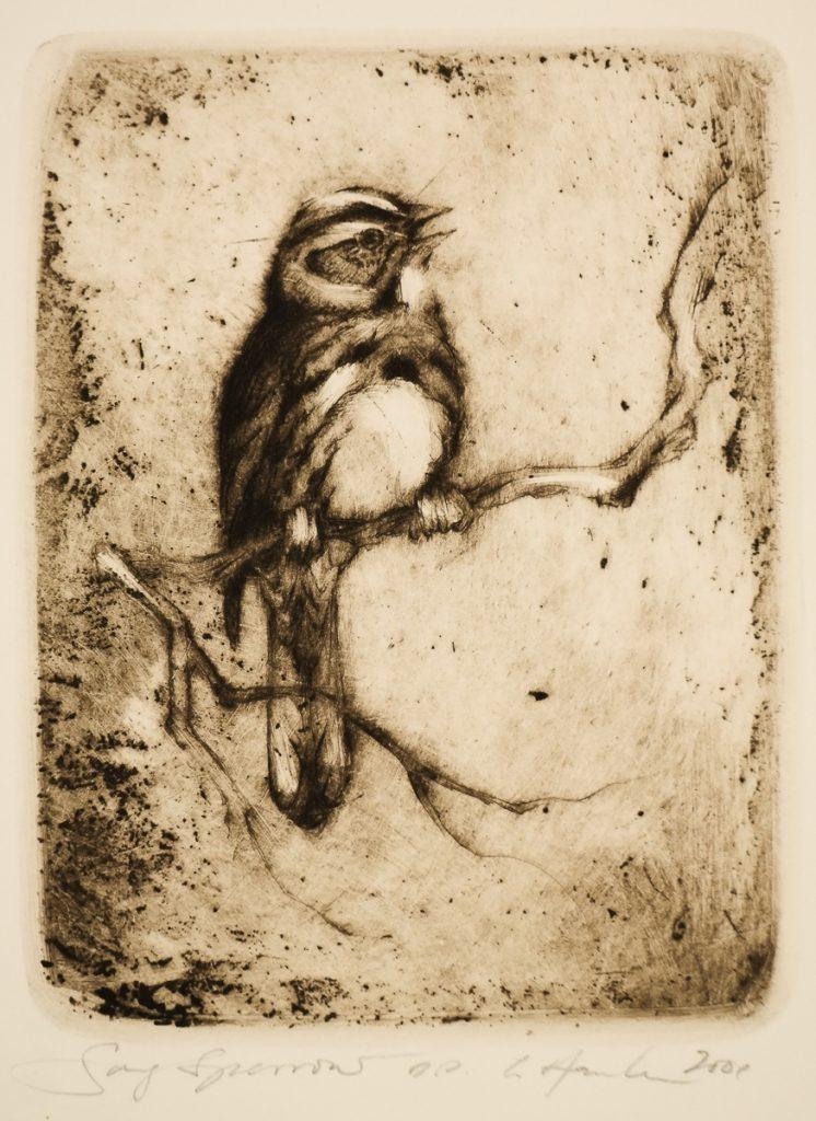 Hanka, Ladislav - Song Sparrow - -21