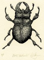 Moyer - Beetle, Naturalist_-2