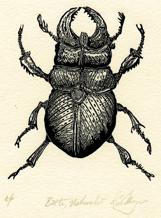 Moyer - Beetle, Naturalist_-2