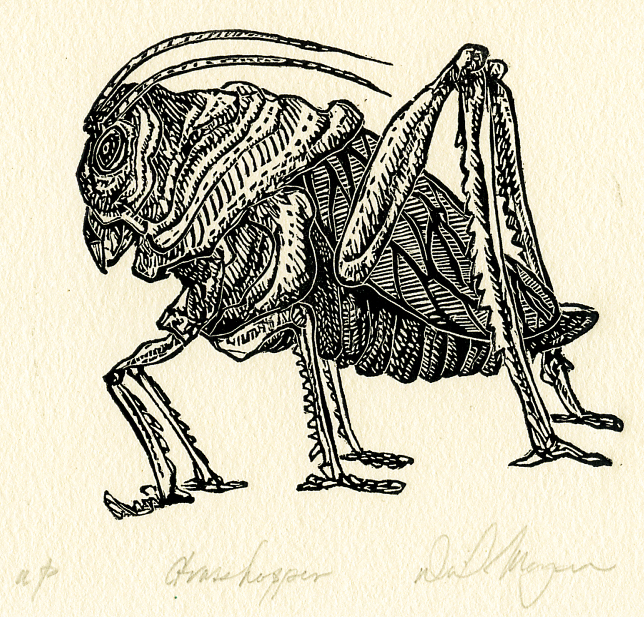 Moyer - Grasshopper_-2