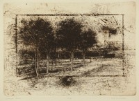 Muirhead, B - Shadow Trees - image