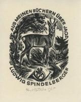 kotrba - wd eng - deer, horn, spindelberger - image